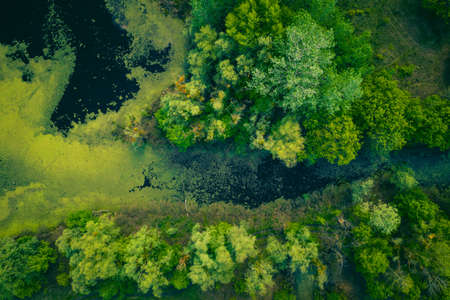 the river and its canals surrounded by oaks. water is covered with algae - Aerial Flight Foto de archivo