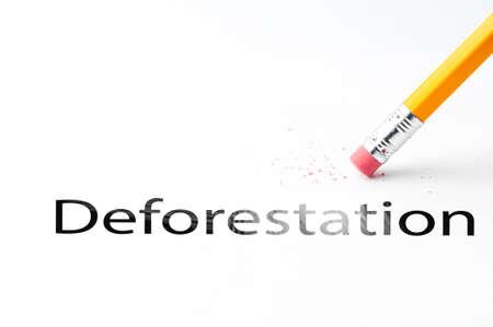 deforestacion: Primer de la goma de borrar y el texto de la deforestación. Deforestación. Lápiz con goma de borrar. Foto de archivo