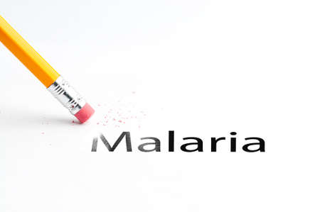 malaria: Closeup of pencil eraser and black malaria text. Malaria. Pencil with eraser.