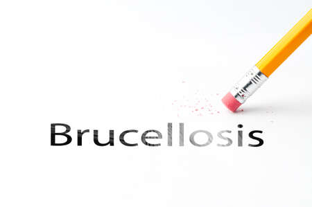 proffesional occupation: Closeup of pencil eraser and black brucellosis text. Brucellosis. Pencil with eraser. Stock Photo