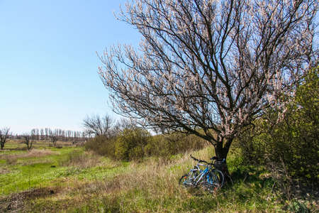 Trees in the steppe near the town of Pology in the Zaporozhye region