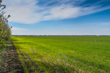 Ukrainian steppe in the spring near the town of Pology. Zaporozhye region, Ukraine. May 2017 Stock Photo
