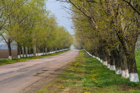 The road from Pavlovsk to Mariyanka. Donetsk region, Ukraine. May 2009