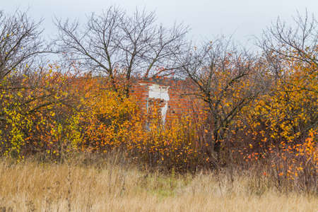 Autumn steppe in the Zaporozhye region. Ukraine.