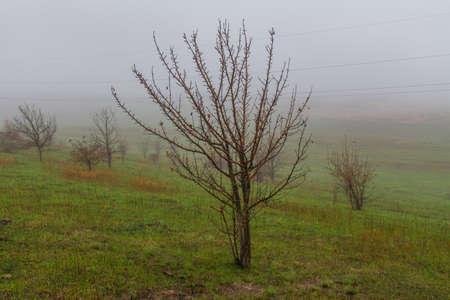 Autumn steppe in the Zaporozhye region. Ukraine.