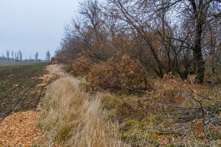 the barbarous destruction of shelter forests in the Ukrainian steppe. Zaporozhye region, Ukraine.