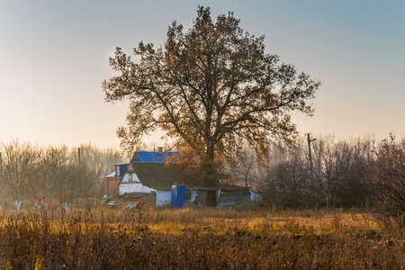 Lonely centuries-old oak near the house in the Ukrainian village. Zaporizhzhya region, Ukraine. November 2019