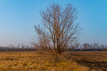 Lonely tree on between arable and steppe. Zaporizhzhya region, Ukraine. November 2019