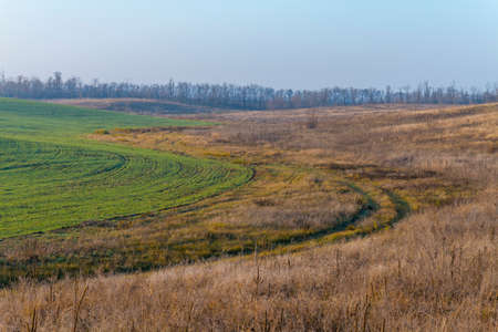 A dirt road along a field of winter wheat in the Ukrainian steppe. Zaporizhzhya region, Ukraine. November 2019