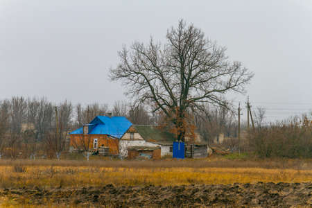 Ancient centenary oak near a rural house. Zaporizhzhya region, Ukraine. November 2019