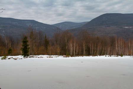 Beech forest in the Carpathian mountains. Zakarpattia region, Ukraine. February 2016