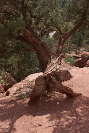 Scenic view of interesting trees and rock formations at Garden Of The Gods Park outside of Colorado Springs,Colorado photo