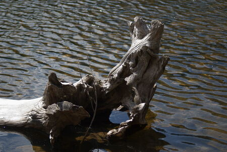 bear lake: Fallen tree trunk at the Bear Lake, Rocky Mountains National Park, Colorado