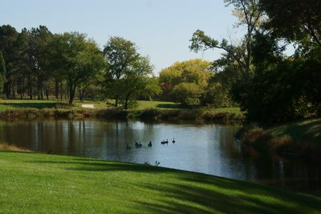pioneers: Geese on a lake at the Pioneers Park, Lincoln, Nebraska