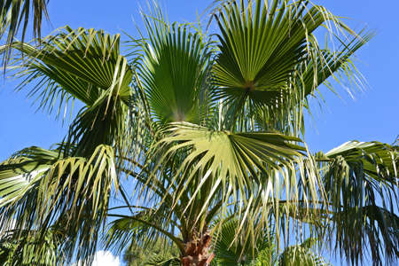 palm tree crown on blue sky