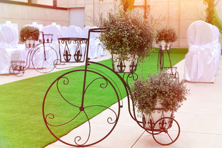 wedding and event decoration, bicycle with pots of flowers and green carpet
