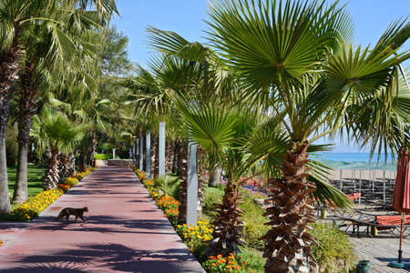 palm alley near the sea and walking cat at tropical resort