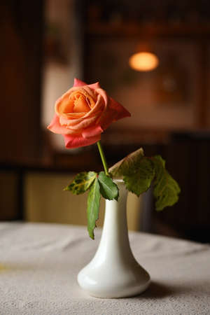 single rose in ceramic vase on a table