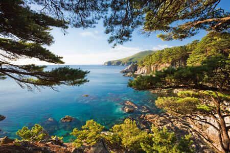 cedar tree: Seascape. See the sea through the branches of cedar with a rocky shore