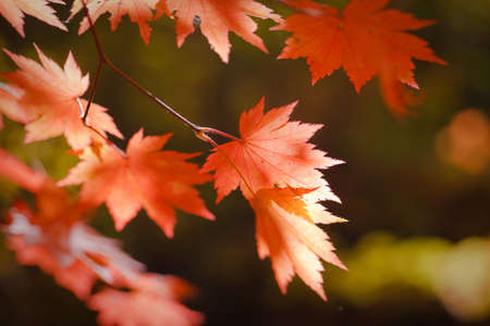 bright autumn leaves in the natural environment Stock Photo