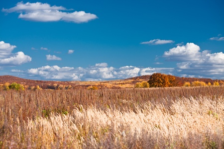 Beautiful autumn landscape, way through the field with withered grass on the background color of autumn forest
