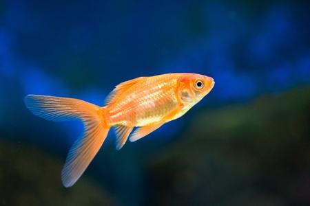 reeffish: cute little fish in an aquarium Stock Photo