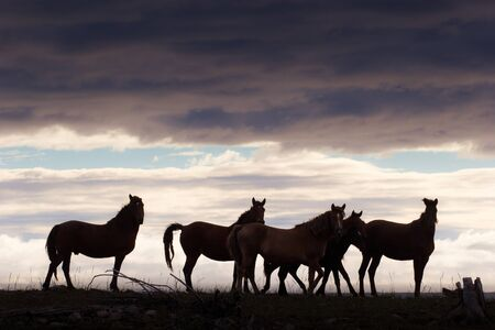 herd of horses grazing in a field at sunset Stock Photo