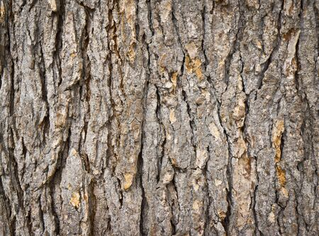 bark: texture of the bark of fir Stock Photo