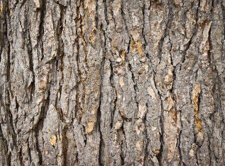texture of the bark of fir Stock Photo