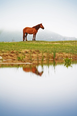 horse laugh: horse against the backdrop of the misty valleys of the Lake