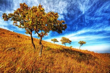 yellow autumn oak tree on the hillside photo
