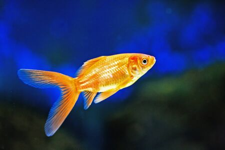 cute little fish in an aquarium Stock Photo - 9995979