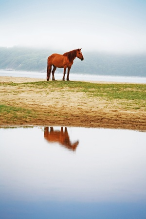horse against the backdrop of the misty valleys of the Lake photo