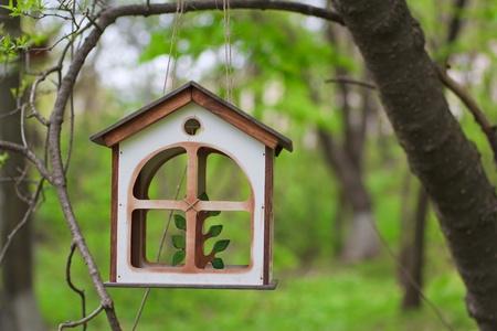 bird feeders in the summer woods photo