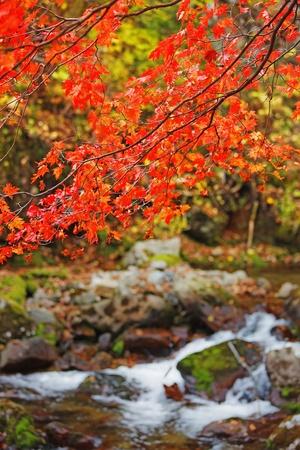 herfst bomen en hun weerspiegeling in het water