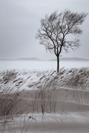 Beautiful lonely tree in winter. Snowy landscape photo