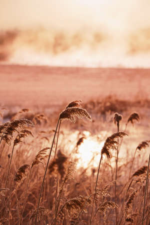 grass verge: beautiful winter nature of the Primorsky Territory, Vladivostok, Russia