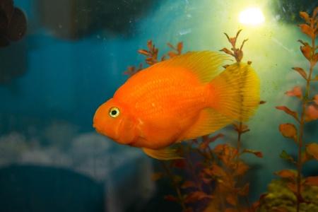 fish living in the aquarium Stock Photo - 12940184