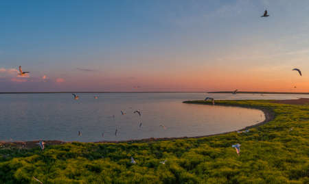 Seagulls fly, Manych-Gudilo lake at sunset from above Archivio Fotografico