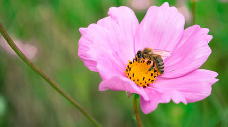 Bee on  a beautiful flower