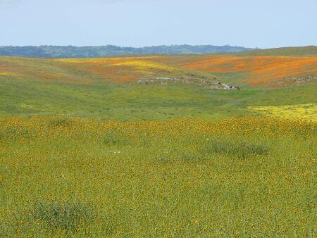 California in the Spring 版權商用圖片