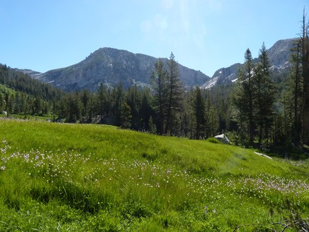 High Sierra Meadow Stock fotó