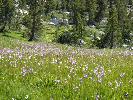 high sierra: High Sierra Meadow Stock Photo
