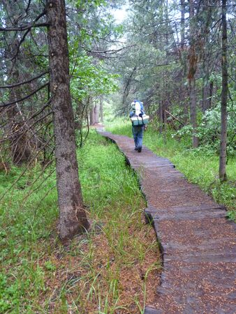 sierras: Hiking in the Sierras, wooden trail