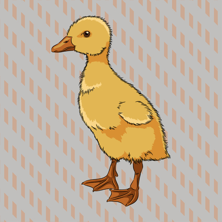 wee: Vector illustration of realistic duckling side view, isolated