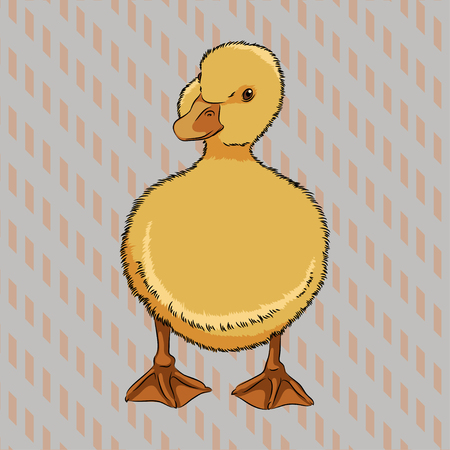 Vector illustration of realistic duckling front view, isolated