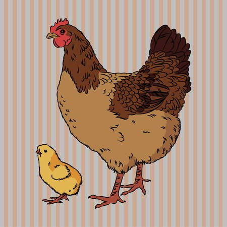 Vector illustration of realistic broody chicken and baby chick, isolated Vector