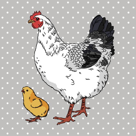 country life: Realistic black and white broody chicken and yellow baby chick, isolated