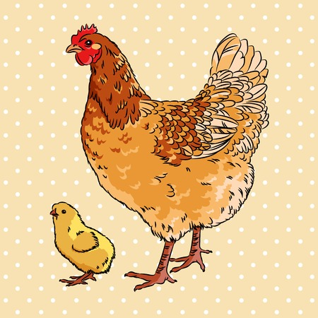 Realistic broody chicken and baby chick, isolated Vector