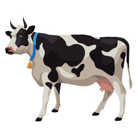 Black and white cow with bell, side view, isolated Illustration